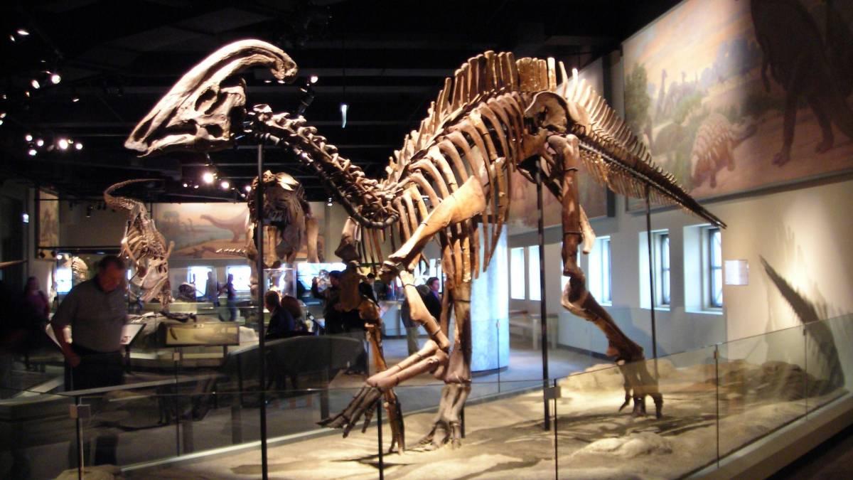 Doença rara encontrada em dinossauro atinge humanos até hoje
